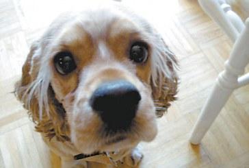 Americans Don't Skimp on Pet Products, Profits Show