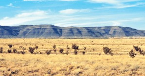 New Mexico Profile, The Shelby Report
