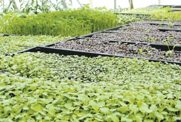 Recirculating Farms Coalition Begins Work in New Orleans