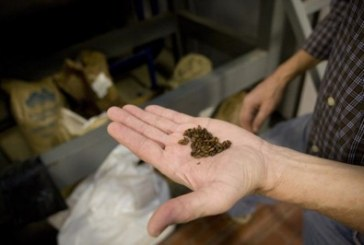 Craft Brewers Tap into Growing Specialty Beer Market