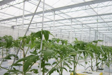 Village Farms Completes First Planting of New Texas Greenhouse