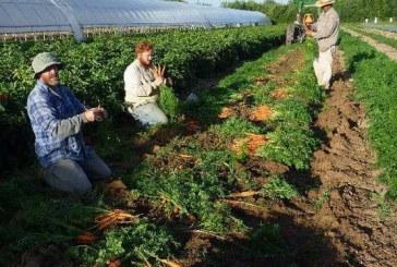 Los Poblanos Organics Now Skarsgard Farms