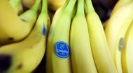chiquita-bananas-590