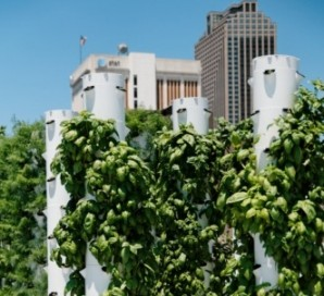Rouses Markets Roots on the Rooftop in New Orleans