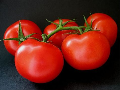 ace 55 tomato care and maintenance