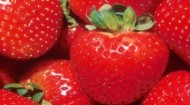 BPIA strawberries image