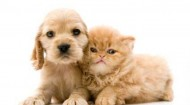 Pets-puppy and kitten