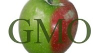 GMO apple image