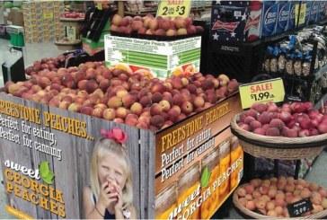 Georgia Peach Growers Expect Outstanding Season