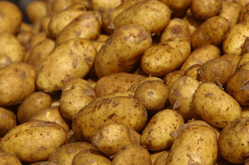 AWG Alleges Potato Price Fixing In Lawsuit