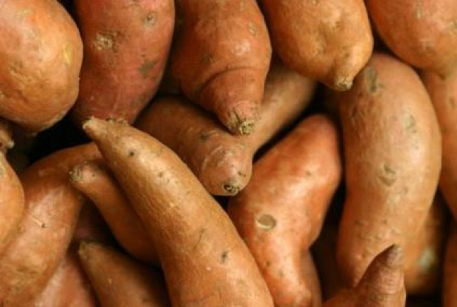Wet Weather Delays Harvest For North Carolina Sweet Potatoes