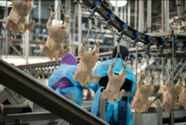 Chicken Council Responds To Report About Poultry Bacteria