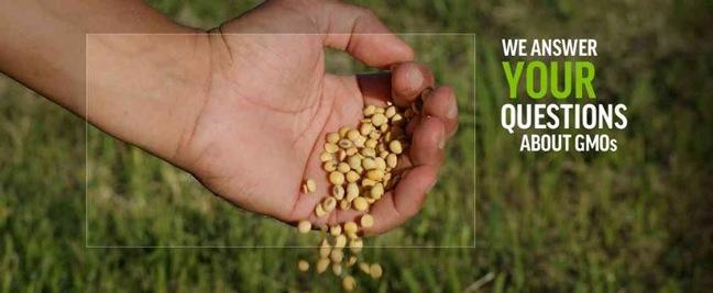 GMO Answers image