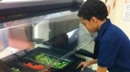 Salad Bars to schools