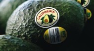CAC-Avos w CA Label