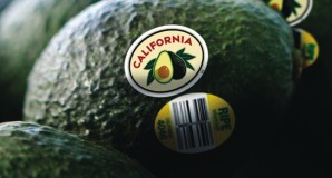 California Avocado Industry Launches On-Fruit Branding Program