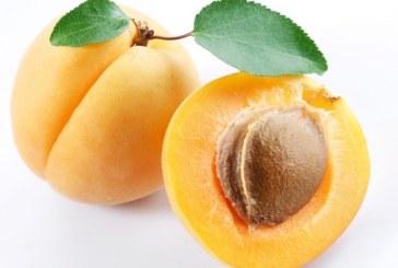 Shipping Of Washington State Apricots Beginning Soon