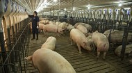 Cargill Dalhart Texas Sow Barn - photo 1 - May 2014