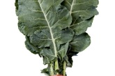 BroccoLeaf Touted As The Next Kale