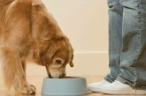 Premium Segment Will Make Up Nearly Half Of Pet Food Sales This Year