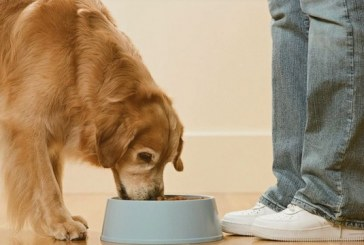 Premium Segment Will Make Up Nearly Half Of Pet Food Sales This Year