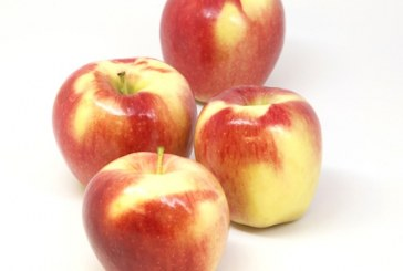 Ambrosia Apples Roll Out Nationwide