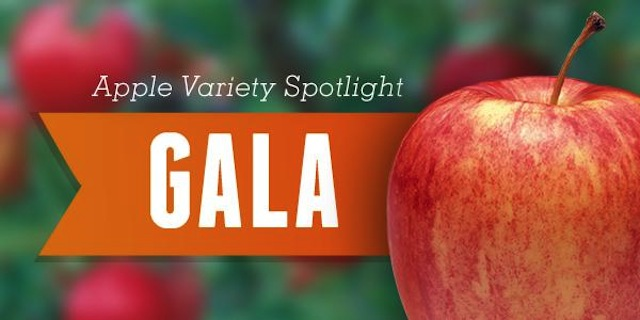 Gala_Apples
