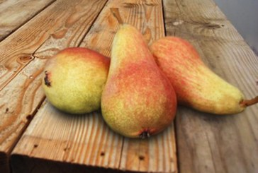 Giumarra's Carmen Pears Offer Unique Flavor And Convenient Size