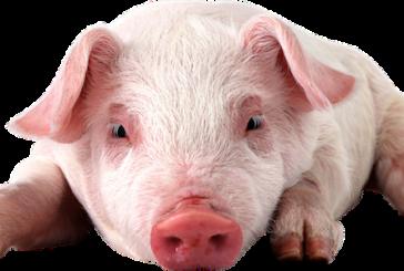 Walmart Announces New Animal Welfare, Antibiotics Position