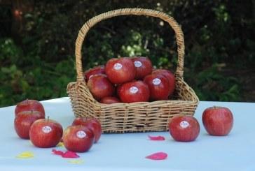 Giumarra Brings New Zealand Citrus, Pipfruit Flavor To North America