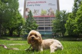Purina Celebrates Take Your Dog To Work Day With Try For World Record
