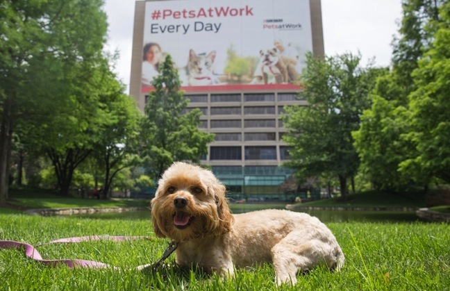 Pets at Work Press Release Image