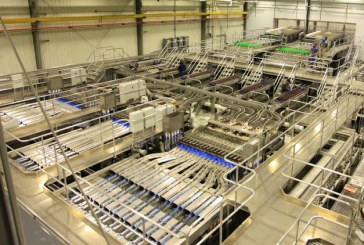 Domex Superfresh Growers Showcases Modern Cherry Packing Lines
