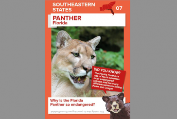 Southeastern Grocers Educates Young Shoppers About Wildlife With New Animal Collector Cards