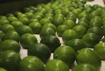 Wonderful Citrus Broadens Lime Business With Acquisitions