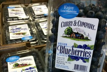 Early Again: Oregon Blueberry Harvest Already Under Way