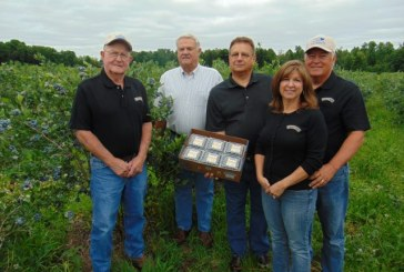 First Pick Marks The Start Of Michigan Blueberry Harvest Season