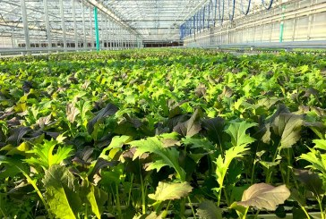 New N.H. Greenhouse Yields Fresh, Sustainable Year‑Round Greens
