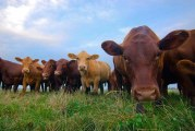 National Milk Producers Lauds Spending Bill For Dairy Pride Act Language
