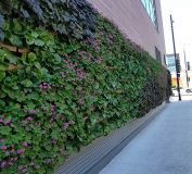 WFM Chicago Living Wall