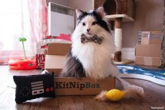 KitNipBox packaging