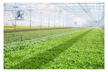 BrightFarms Entering Texas With $17M Hydroponic Greenhouse