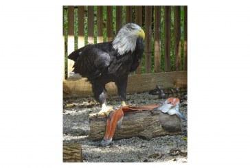 Dorothy Lane Market Feeds The Birds At Glen Helen Raptor Center