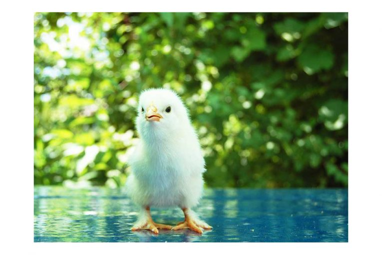A chick photographed outside