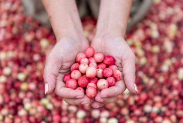 Ocean Spray Harvests Pink Cranberries For Breast Cancer Campaign