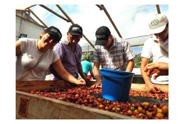 S&D Coffee & Tea Invests In Smallholder Farmers With CQI Q Processing Training