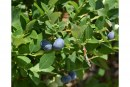 Import Berry Season Has Begun For Crystal Valley Foods