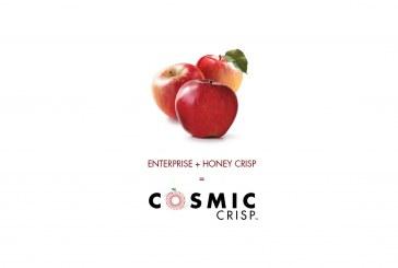 Cosmic Crisp Varietal Launch Will Be 'Largest In Apple History'